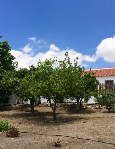 casa-rural-el-naranjo-antequera-exteriores (3)