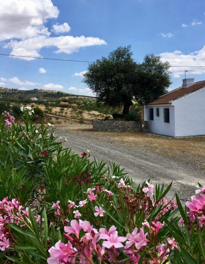 casa-rural-el-naranjo-antequera-piscina (3)